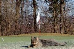 Katze auf dem Chipping-Grün